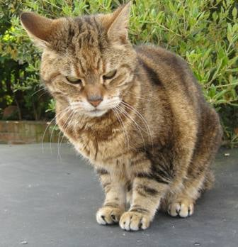 Image result for old cat