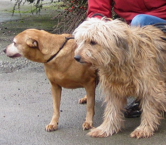 Painkillers For Dogs With Arthritis Uk