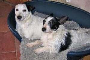dogs - jack & nolene