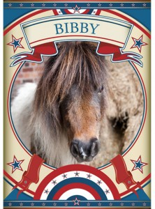 Bibby Mini Pony at the Sanctuary