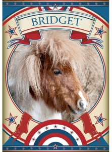 Bridget Mini Pony at the Sanctuary
