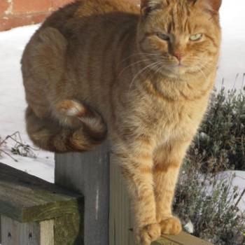 Orangina Sanctuary Cat