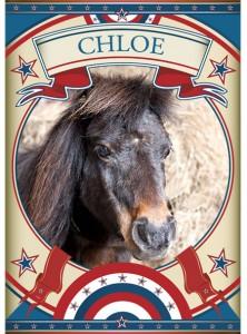 Chloe Mini Pony at the Sanctuary
