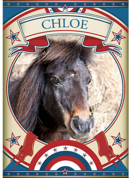 Chloe Mini Pony at the Sanctuary