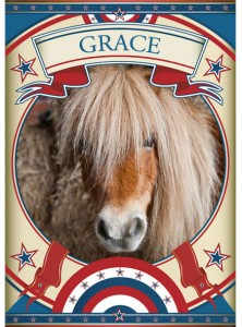 Grace Mini Pony at the Sanctuary