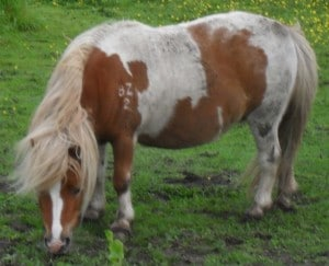 ponies - daydream 14