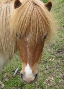 ponies - daydream 27