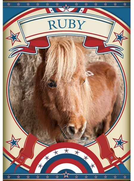 Ruby Mini Pony at the Sanctuary