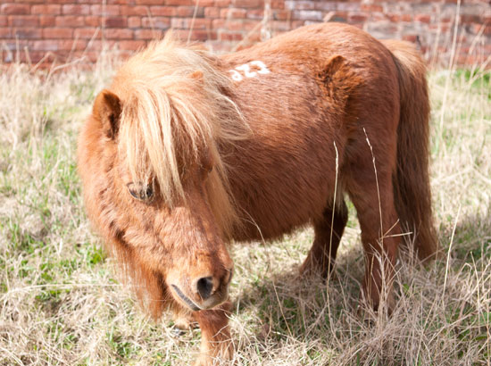Meet Ruby in our Mini Pony Club