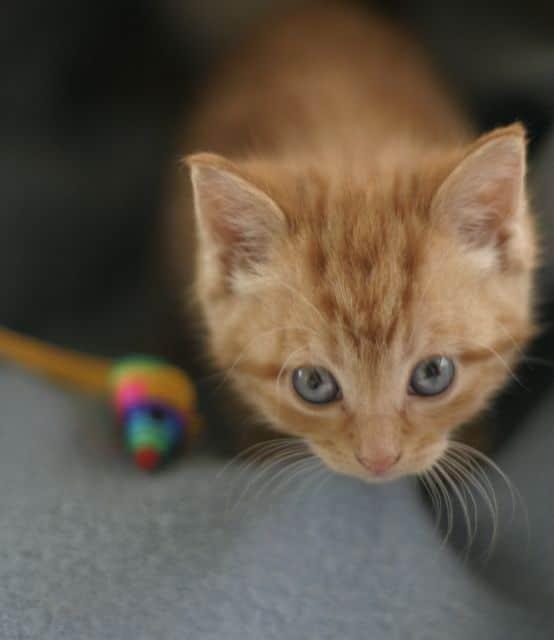 kitten lovers meet kittens images