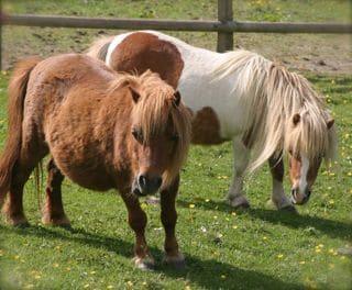 Sanctuary Ponies