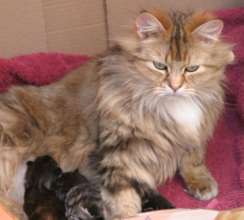 cats - dorcas & kittens