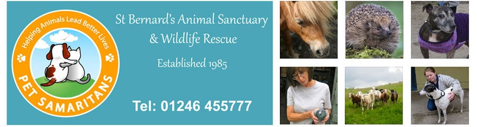 St Bernards Animal Sanctuary and Wildlife Rescue Derbyshire