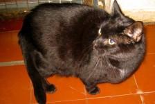 cats - jake