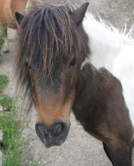 ponies - Bibby