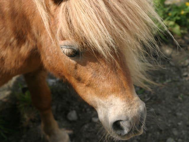 ponies - grace 5