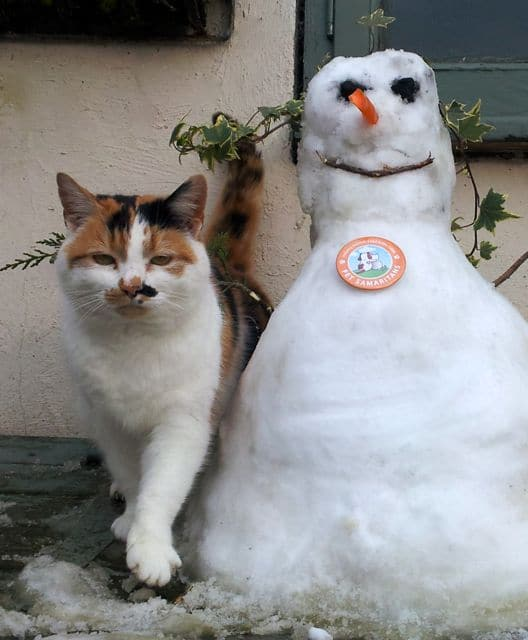 The cat and the snowman