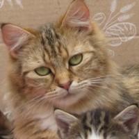 cats - dorcas
