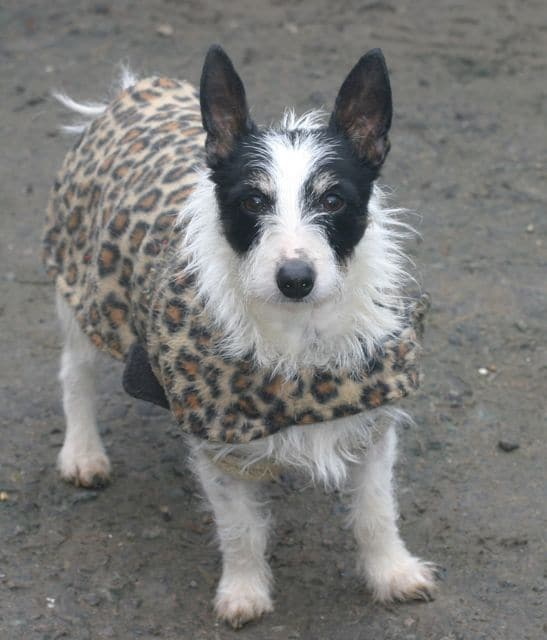 dogs - nolene new coat 2