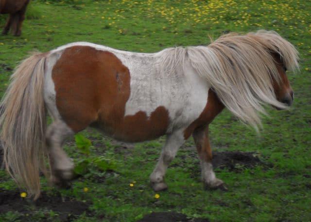 ponies - daydream 12