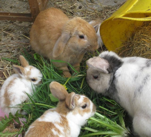 bunnies - two litters 10