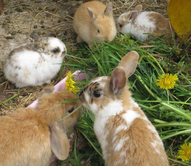 Baby rabbits for adoption