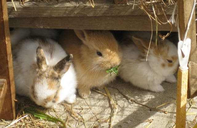 bunnies - two litters