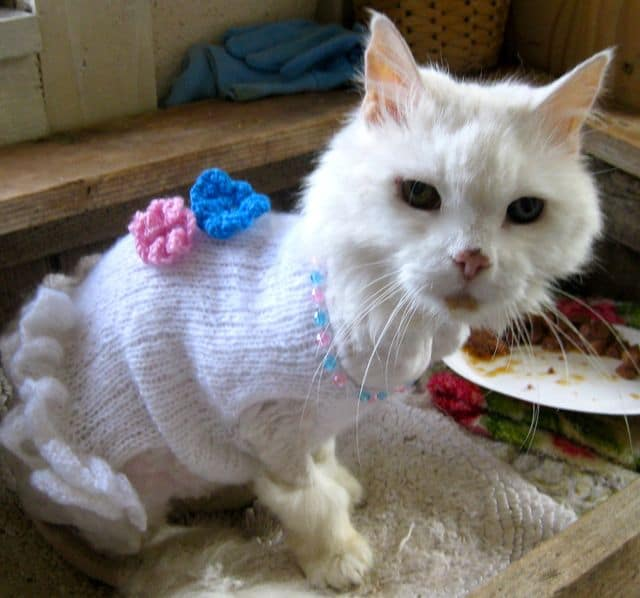 cats - pebbles in dress