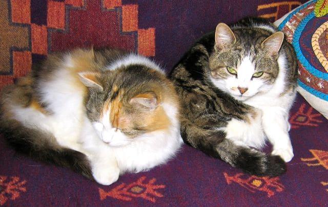 cats - mischa & myrtle 20