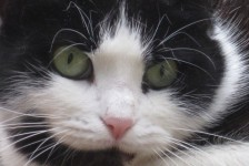cats - tiggy