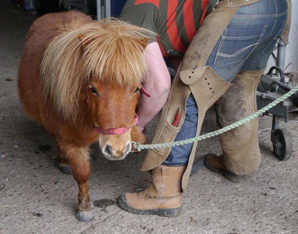 ponies-blacksmith 2