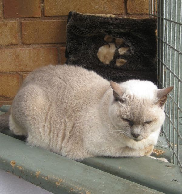 cats - Tamba 3
