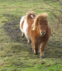 ponies - sundance 4