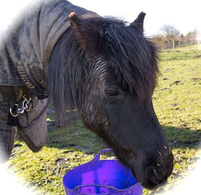ponies - holly 2