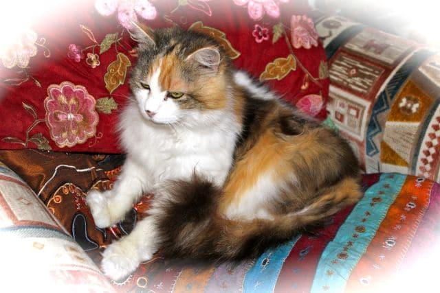 cats - mischa 20