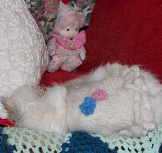 cats - pebbles comfy