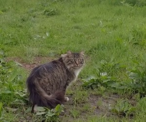 cats - tallulah 21