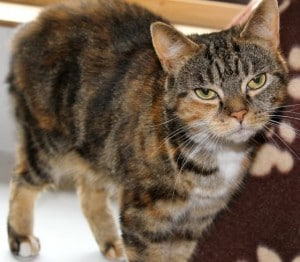 cats - tigerlily 5
