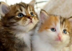 kittens - dorcas babies