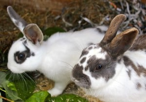 rabbits - mabel & betty 2
