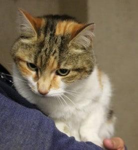 Should I Feed A Stray Cat Uk