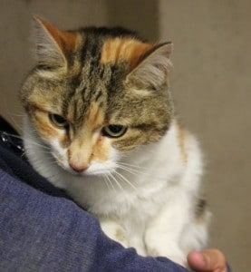 cats - binkie