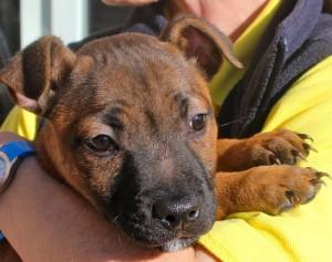 dogs - puppy sunni