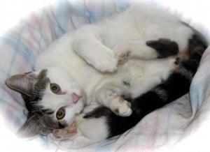 kittens - donny 5