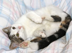 kittens - donny 7