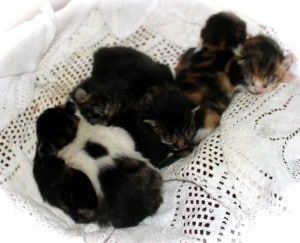 kittens - new born sale day