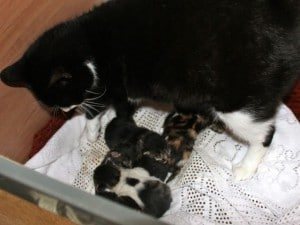 kittens - new borns & mom