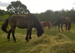 ponies - hay appeal 2