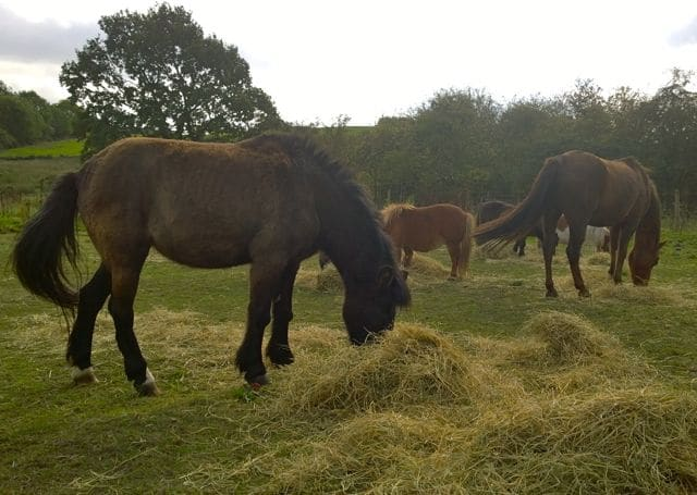 Hay and straw appeal    Please help us feed the ponies