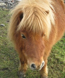 ponies - sundance 2